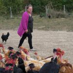 Les poulets de la Marquise